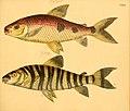 Naturgeschichte in Bildern mit erläuterndem Text (Taf. CXX) (6058679553).jpg