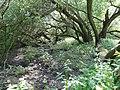 Naturschutzgebiet Heuckenlock 21.05.2014 Phase 102.JPG
