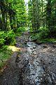 Naturwaldreservat Fichtelseemoor 01.jpg