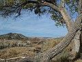Near Gorman, CA, View N, Near the Former Caswell's Auto Camp , Stream Course, 2011 - panoramio.jpg