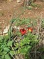 Nesher, Park Nesher, Wadi Katia 157.JPG