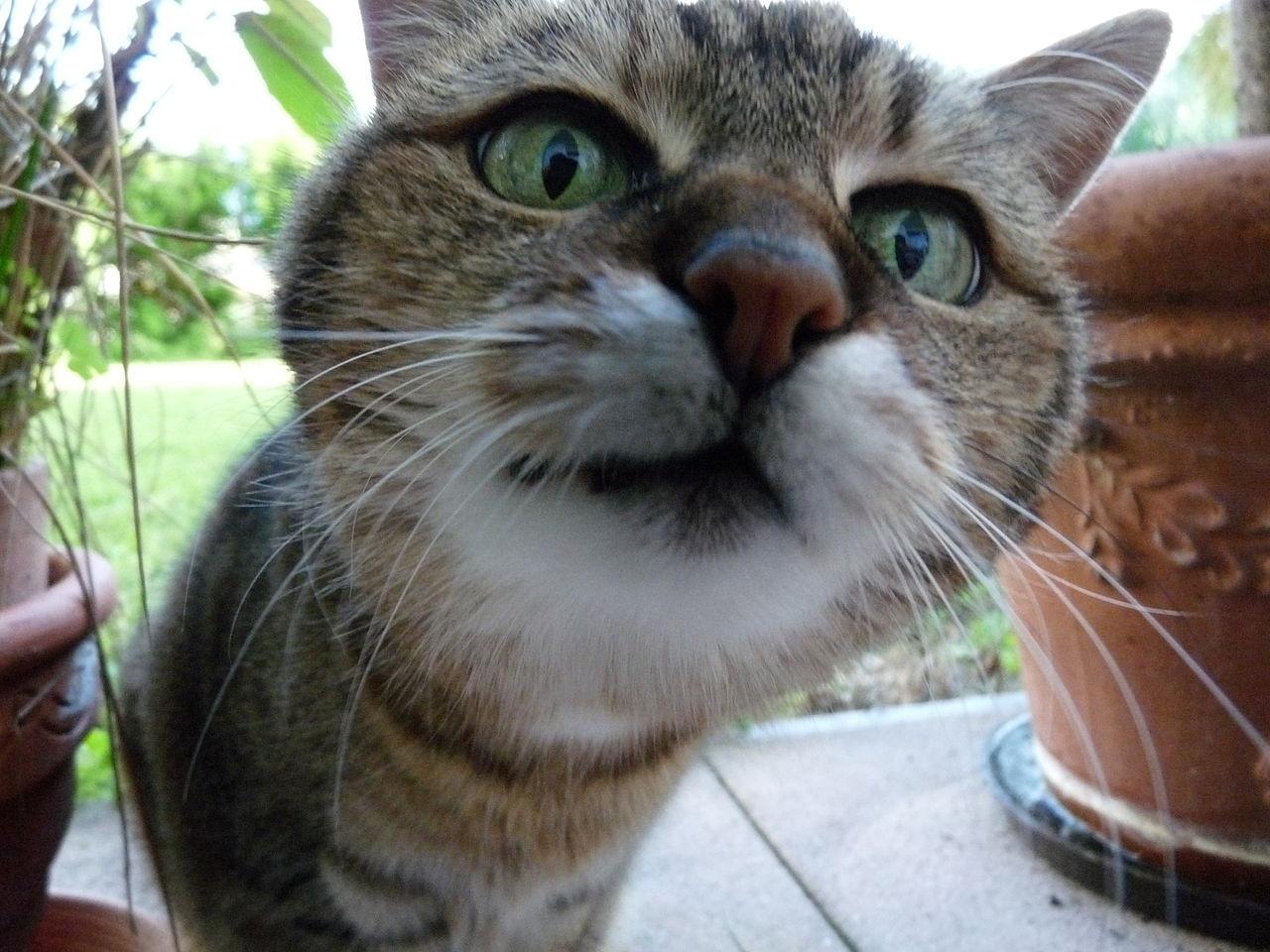 File:Neugierige-Katze.JPG - Wikimedia Commons