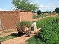 Niger millet Koremairwa 1214.jpg