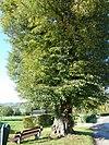 noorbeek-wegkruis aan boom tegenover schey 3 (3)