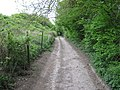 North Downs Way on Pilgrims Way - geograph.org.uk - 1292784.jpg