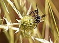 Nostres amics, els insectes - Nuestros amigos, los insectos - Friends insects (5169068036).jpg
