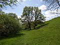 Oaks by the path - geograph.org.uk - 1295341.jpg