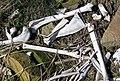 Odocoileus virginianus bones (white-tailed deer) (northeast of Frazeysburg, Ohio, USA) 3 (25764597997).jpg