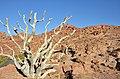 Okolí Brandberg White Lady Lodge - Namibie - panoramio (1).jpg