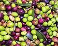 Olive toscane 2020.jpg