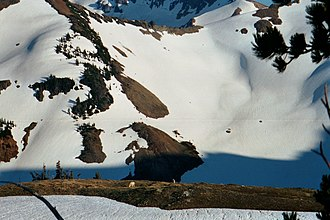 Yakima County, Washington - Mountain Goats near the glaciers of Goat Rocks Wilderness