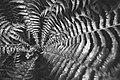 Ormegras ved Olterudelva 20-08-19.jpg
