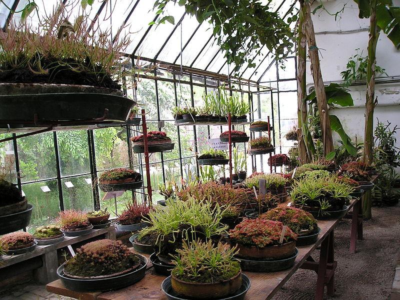 table pour serre de jardin