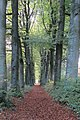 Our walk trough Mariendaal in autumn colours at 27 October 2013 - panoramio.jpg