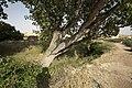 PM 016984 E Belchite.jpg