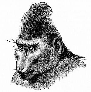 Placid Celebes macaque