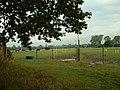 Paddocks near Walberton - geograph.org.uk - 32539.jpg