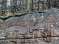 Paleosol (Cave Branch Member, Slade Formation, Upper Mississippian; Clack Mountain Road Outcrop, south of Morehead, Kentucky, USA) 1 (31348973357).jpg