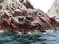 Paracas National Reserve.- les otaries .jpg