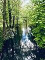 Paradiesisches Gewässer in der Schorfheide.jpg