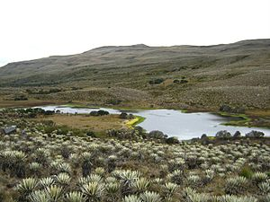 Sutagao people - The Sumapaz Páramo, the largest páramo in the world, was home to the Sutagao