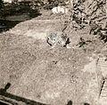Parque del Este 1968 002.jpg