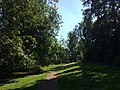 Path Between Trees in Tring.jpg