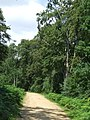 Path in Epping Forest - geograph.org.uk - 2523520.jpg