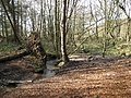 Peatpits Brook - geograph.org.uk - 1191051.jpg