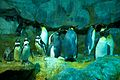 Penguins! (JURONG BIRD PARK-SINGAPORE) (6025142189).jpg