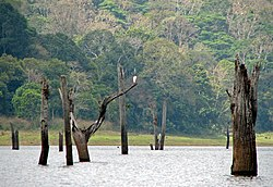 Periyar National Park 02.jpg