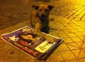 Perro junto a afiche de Roxana Miranda.png