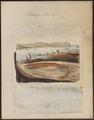 Petromyzon branchialis - 1700-1880 - Print - Iconographia Zoologica - Special Collections University of Amsterdam - UBA01 IZ14300025.tif