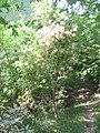 Pianta da Giardino - panoramio.jpg