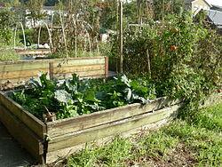 bordure de jardin pas cher