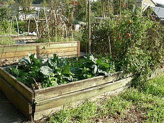 Raised-bed gardening - Picardo Farm, Wedgwood neighborhood, Seattle, Washington: A community allotment garden with raised beds for the physically disabled.