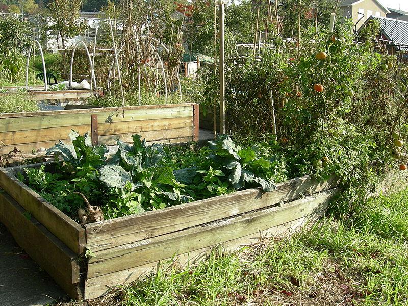 Filling A Raised Garden Bed Nz