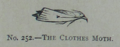 Picture Natural History - No 252 - The Clothes Moth.png