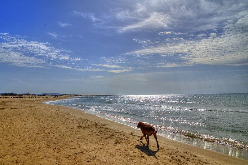 חוף עתלית 2