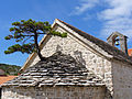 Pine Tree (Pinus nigra), on the roof of St. Peter's Church in Nerezisce on the island of Brac, Croatia.JPG