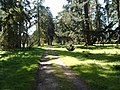 Pinetum at Glamis - geograph.org.uk - 401087.jpg