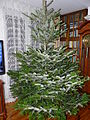 Piotrus XMAS tree preparation - 03.JPG