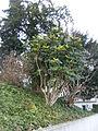 Plant.6541.JPG