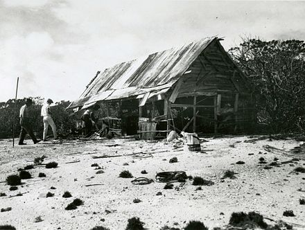 Members of the Tanager Expedition explore an abandoned feather poaching camp on Peale Island. Poacher's workshop, Peale Island, July 27, 1923.jpg