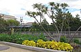 Pollinator Garden in April (16994665373).jpg