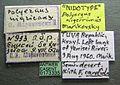 Polyergus nigerrimus casent0173335 label 1.jpg