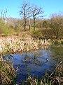 Pond, Tottington Wood - geograph.org.uk - 757061.jpg