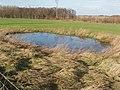 Pond, alongside the lane to Home Farm, near Bilton Haggs - geograph.org.uk - 326214.jpg