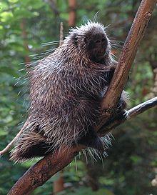 Porcupine-BioDome.jpg