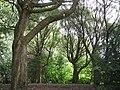 Porolahdenpuisto puut.jpg